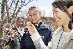 荒神山公園桜の開花宣言ネット