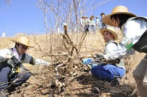 春の雑木処理ネット用