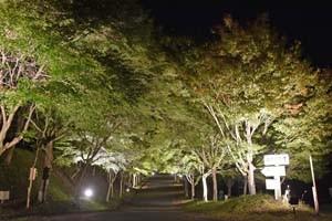 もみじ湖ライトアップ191018