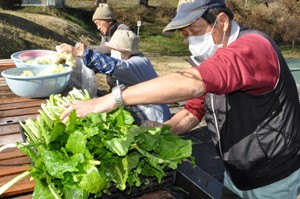 HP荒神山のお菜洗い201210